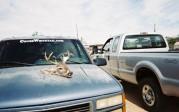 John Boston sticker and deer