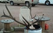 Tanclan elk and sticker
