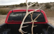 Ty Hart sticker and elk antlers
