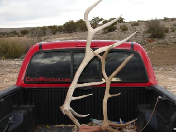 elk antlers arizona, elk sheds