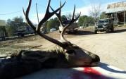 wild heritage buck with sticker in background
