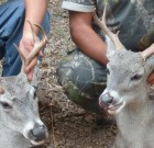 San Carlos Rez Bucks 2010