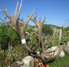 2012 Elk Contest – Don't forget to enter!