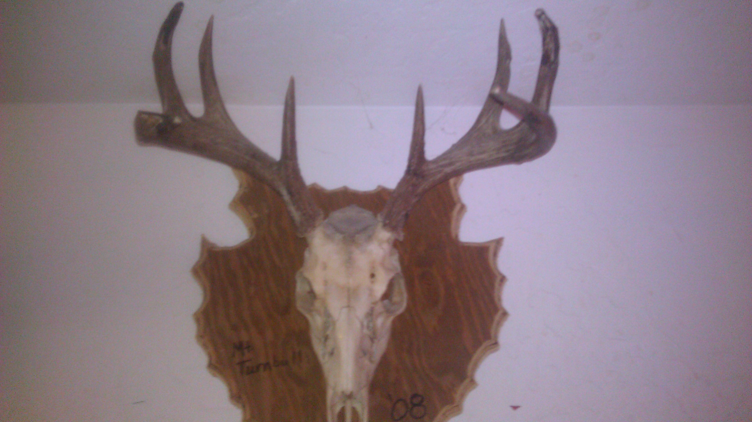mike way 105 san carlos coues buck