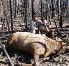 sams 2012 cow elk