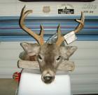 2012 6A Buck