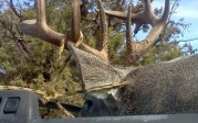 Coues Hunting Success in New Mexico by Robert Jacquez
