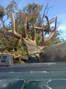 coues whitetail deer buck New Mexico