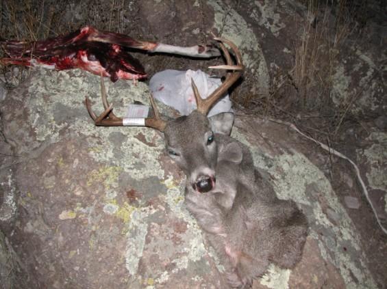 Chiricahua buck 2012