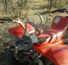 2012 patagonia Coues Whitetail buck