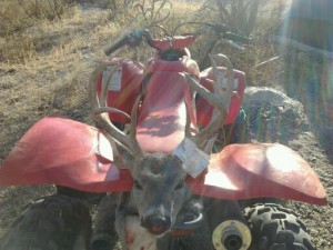 coues whitetail deer buck