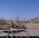 VOTE now in the Trail Camera Contest!!