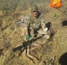 Scotts mule deer