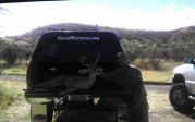 Kico's 2012 Coues Buck 36B