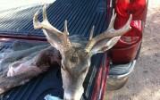 34a archery buck
