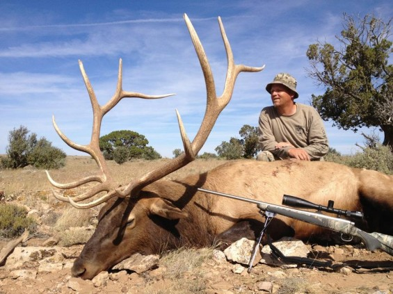 arizona rifle bull elk