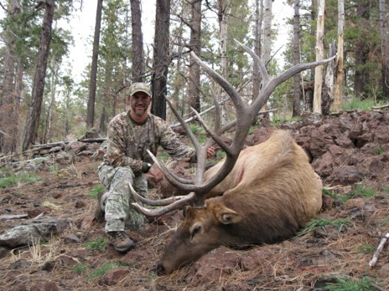 archery bull elk