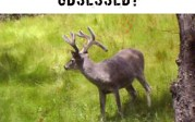 Would this buck make you OBSESSED?