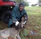Couesdeerhtr takes a nice velvet buck in August 2013