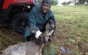 Couesdeerhtr takes a nice velvet buck in August 2013