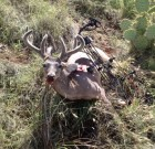 First Coues Buck with a bow, spot and stalk