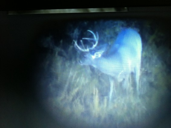 A buck I passed up during the October hunt... what do you think he scores?