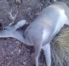 2013 My first deer hunt.