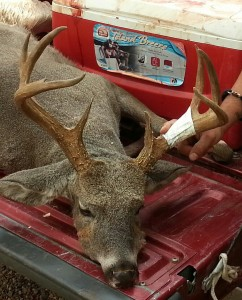 Coues Whitetail buck