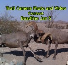 4th Annual Trail Camera Photo and Video Contest