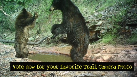 Vote now for your favorite Trail Camera Photos!