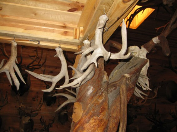 coues-set-my-antler