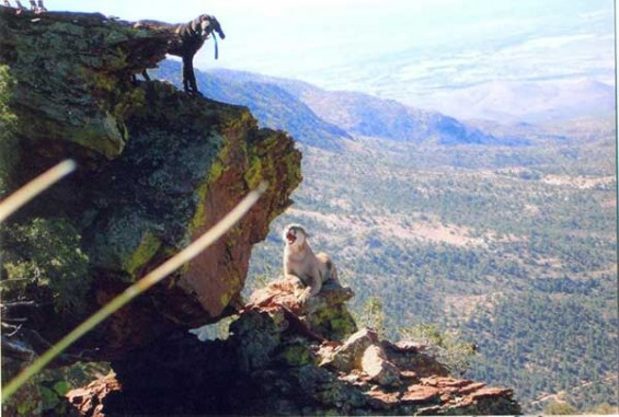dieringer mtn lion cliff