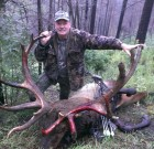Awesome Elk!