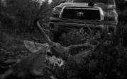 WMAT 3a mule deer