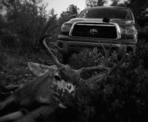 2014 WMAT 3a mule deer