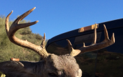 My First Coues Deer