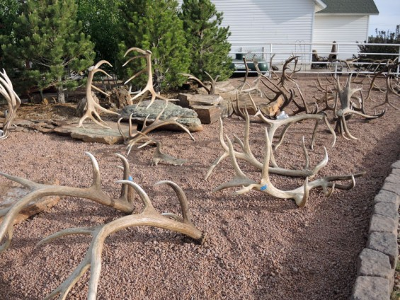 elk-sheds-outside