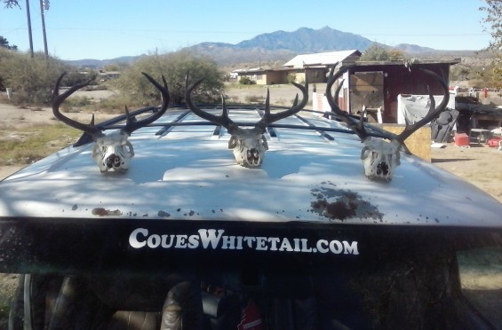 2015 Coues Bucks from San Carlos Reservation