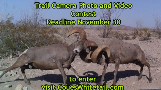 2016 Trail Camera Photo and Video Contest!