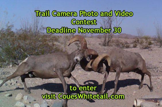 trail-cam-contest-ad